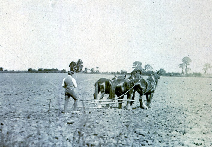 "1920s  John Gurney in Millway (Hambridge Way) with a drag harrow preparing the ground for planting. The whipple tree and way trees to which the horses were chained can be seen clearly. Land in Pirton was called ""two horse plough,"" as two horses were needed to plough one acre in a day. Laurie Franklin was the last farmer to plough with horses in Pirton; Derek Cook remembers the last horse ploughing in 1946 at Recklin's Piece, the field adjacent to Wood Lane."